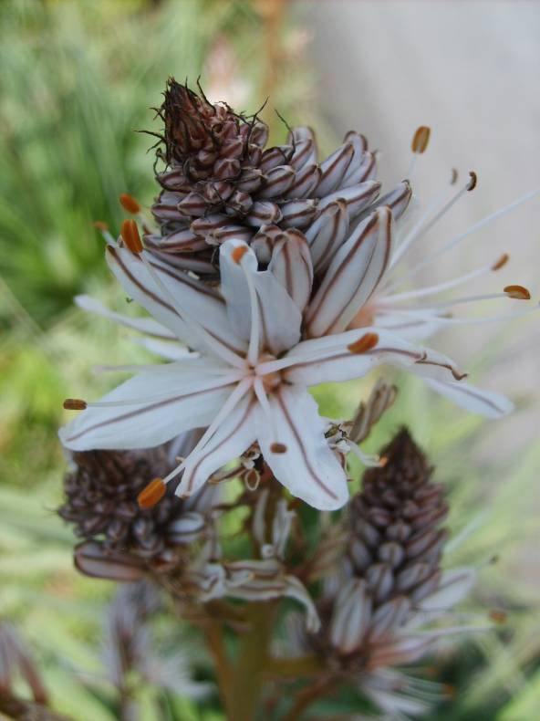 toutes les fleurs du cruzzini le langage des fleurs. Black Bedroom Furniture Sets. Home Design Ideas